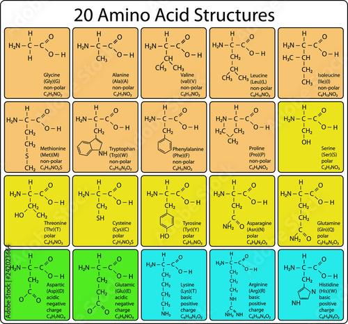 Photo 20 Amino Acid Molecules Skeletal Structure