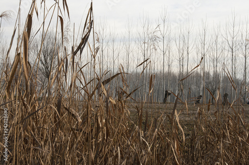 Fotografie, Obraz  grano secco, raccolta