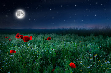 Panel Szklany Maki Beautiful poppy field in the night and full moon