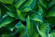 Ostre zielone liście