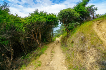 Fototapeta na wymiar Hiking the Coromandel Coastal Walkway, New Zealand 30