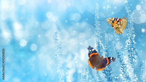 Fotografie, Obraz  Natural bright background with butterflies on wildflowers
