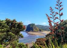 Piha Beach, Lion Rock And Pohutukawa Tree Flowering In December, New Zealand