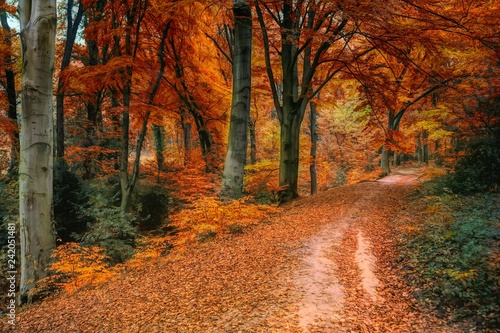 Garden Poster Road in forest En el bosque