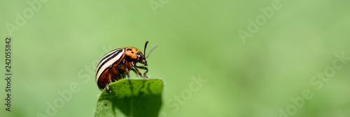 Fotografía Insekten Panorama der Tiere