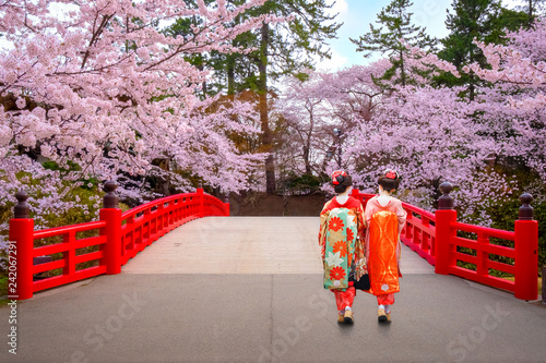 Japanese geisha with Full bloom Sakura - Cherry Blossom  at Hirosaki park in Japan