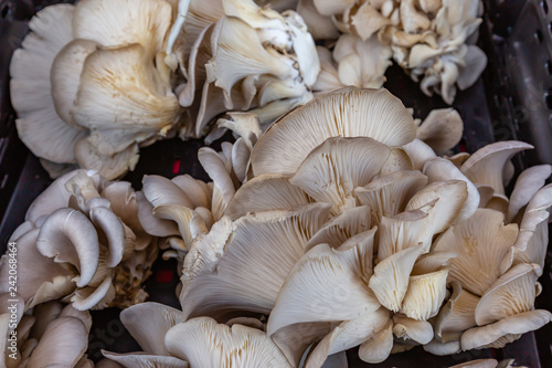 Fotografie, Obraz  Pearl River Walk Market Mushrooms