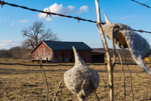 Old Wooden Barn Through The Rusted Barbed Wire Fence.  Putnam County, Illinois, USA