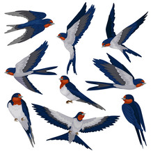 Flying Swallow Birds In Various Views Set, Flock Of Birds Vector Illustration On A White Background