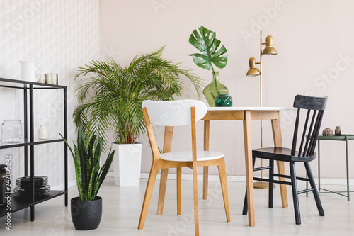 Fototapeta White and black chair at wooden table in dining room interior with plants and gold lamp. Real photo obraz na płótnie