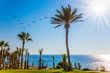 Palm grove on the shore