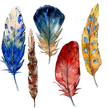 Watercolor Bird Feather From Wing Isolated. Watercolour Drawing Feathers Background Illustration Element.