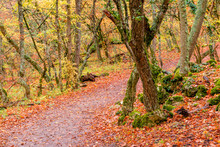 A Path In The Park, Covered With Fallen Red Leaves