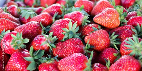 Fotografía  Serbian strawberries. Kisac. Close up