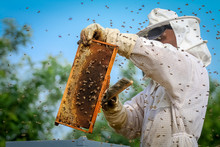Beekeeper Controlling Colony A...