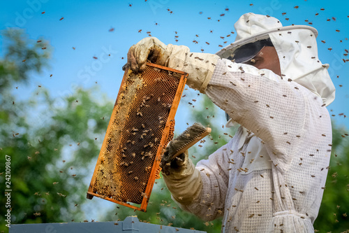 Beekeeper Controlling Colony And Bees Canvas Print