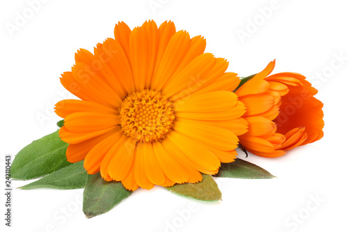 Fotografía  marigold flowers with green leaf isolated on white background