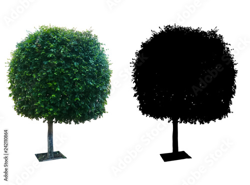 Fotografie, Obraz  single decoration tree isolated on white background with black silhouette