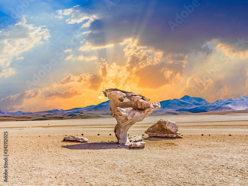 Arbol de Piedra (tree of rock), the famous stone tree rock formation created by Canvas Print