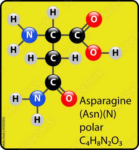 Asparagine Amino Acid Molecule Ball and Stick Structure Canvas Print