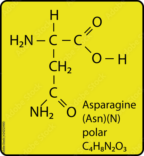 Photo Asparagine Amino Acid Molecule Skeletal Structure