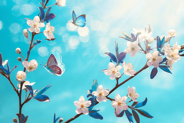 Obraz na SzkleBeautiful branch of blossoming cherry and blue butterfly in spring at Sunrise morning on blue background, macro. Amazing elegant artistic image nature in spring, sakura flower and butterfly.