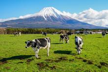 静岡県 富士山 牛 ...