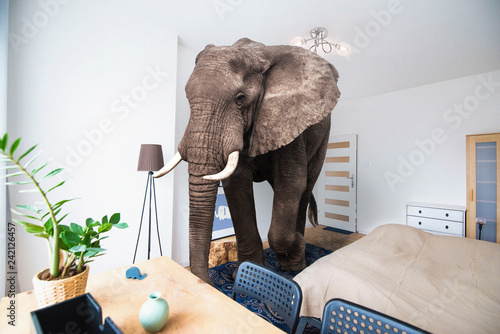 Poster Olifant Elephant in the room