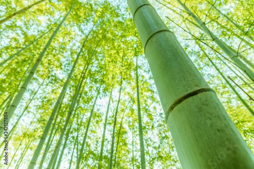 光溢れる竹林