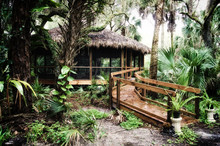 Early Morning View Of Inside Of A Subtropical Forest Wilderness Area In Estero Florida Showing Old Thatched Hut Or Gazebo, Stylized And Desaturated.