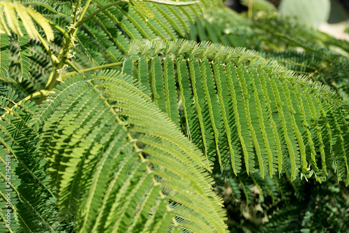 Fotografía  Big branches with green fern leaves. Natural background