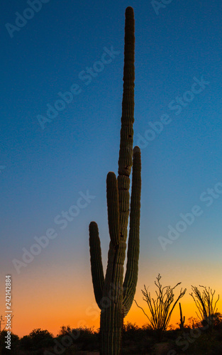 Papiers peints Cactus Arizona deserts are home to many different types of cacti. Silhouettes that show the different shapes of these Southwest USA beauties are pictured against setting sun backdrop in these nature photos