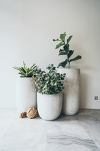 A Large Clay Pot With A Green Plant
