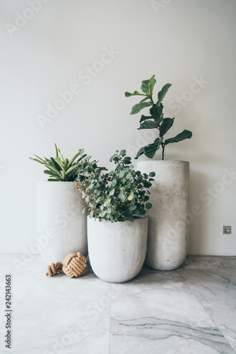 A large clay pot with a green plant Fototapete