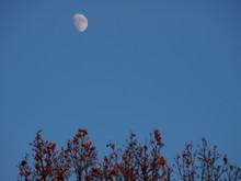 Luna Di Giorno E Alberi