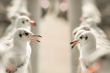 Seagulls Standing And Looking ...