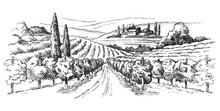 Vineyard Illustration