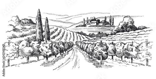 Foto  vineyard illustration