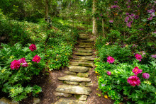 Stone Stairs With Rose