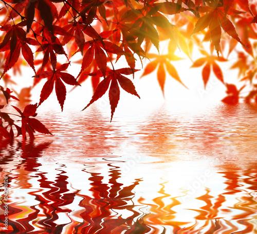 Feuilles d'érable avec reflet zen.