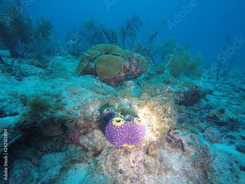 Corales del mar caribe #242163804