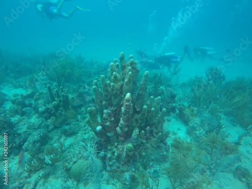 Fotografie, Obraz  Corales con peces en el mar azul del caribe