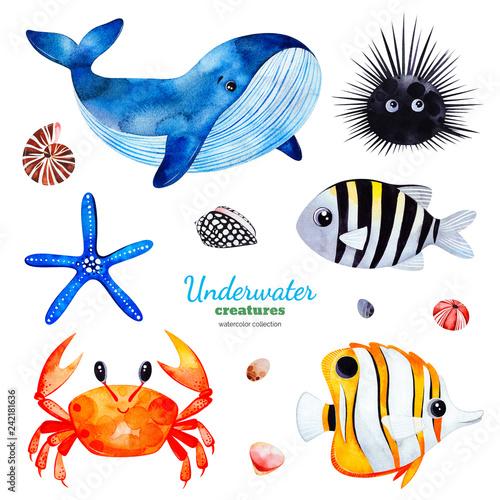 Fototapeta premium Podwodne stworzenia. Kolekcja akwareli z wielobarwnymi rybami koralowymi. Muszle, kraby, wieloryby, rozgwiazdy, jeżowce itp. Idealne na zaproszenia, dekoracje imprezowe, do druku, projekty rzemieślnicze, kartki z życzeniami, naklejki
