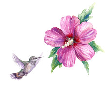 Watercolor Humming Bird And Pi...