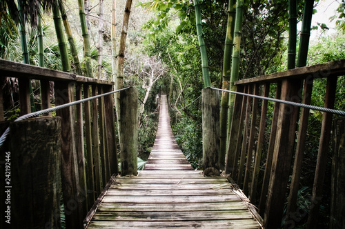 Old wooden suspension bridge over the Estero River in Florida surrounded by tropical vegetation stylized and desaturated.