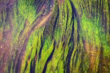 Green Algae In River