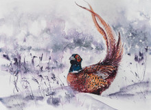 Beautiful Illustration With Watercolor - Forest Pheasant In Winter.