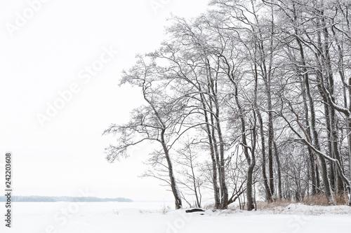 Winter landscape with alder trees Canvas Print