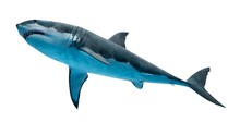 Illustration Of A Great White Shark