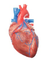 Illustration Of A Heart With 2...